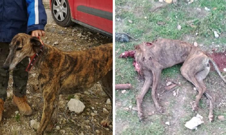 Arrancan la cabeza a la galga de un cazador tras asaltar su finca en Segovia