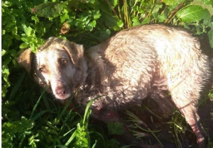 Retiran la licencia de armas al individuo que tiroteó a una perra en Lugo