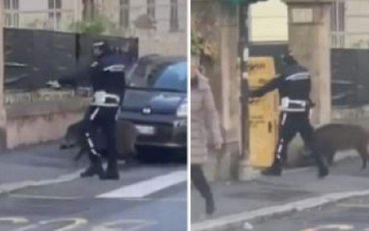 policía jabalí