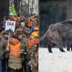 Los cazadores polacos se oponen a exterminar jabalíes para frenar la PPA