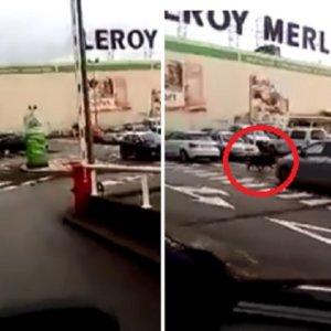 Un jabalí se cuela en el parking de un Leroy Merlin en Gijón