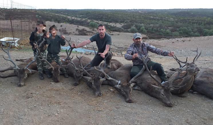 Caza ocho ciervos en una montería en abierto de 80 euros el puesto