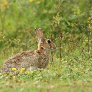 Ocho cotos de Aragón piden cazadores voluntarios para frenar la plaga de conejos