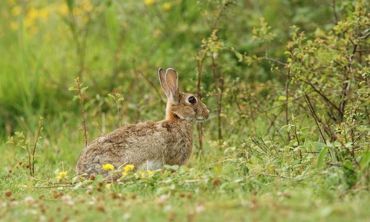 conejos aragón