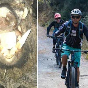 Un cazador salva a tres ciclistas del ataque de un jabalí en Pirineos