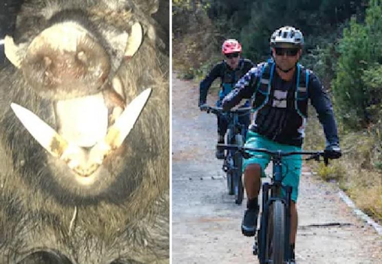 jabalí ciclistas