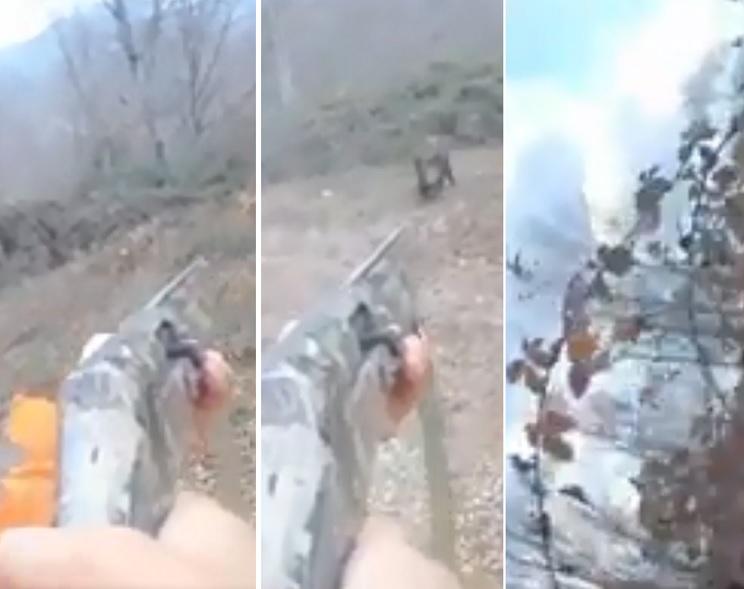 Un jabalí ataca a un cazador que tiene que tirarse a unas zarzas para evitar la tarascada