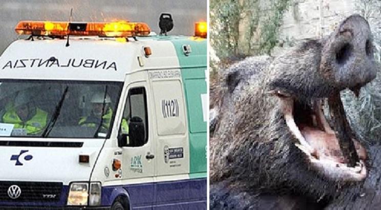 Un jabalí ataca a un cazador de 81 años y le fractura la tibia y el peroné
