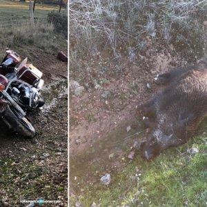 Herida una motorista de 47 años tras chocar contra un jabalí en Salamanca