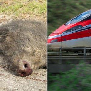 Un jabalí ocasiona un accidente en una vía de tren y provoca retrasos de hasta 45 minutos