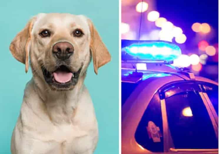 Mata a su perro a patadas por hacer sus necesidades en casa