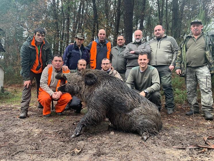 Consiguen cazar a un enorme jabalí que se aculó ferozmente durante horas en su encame