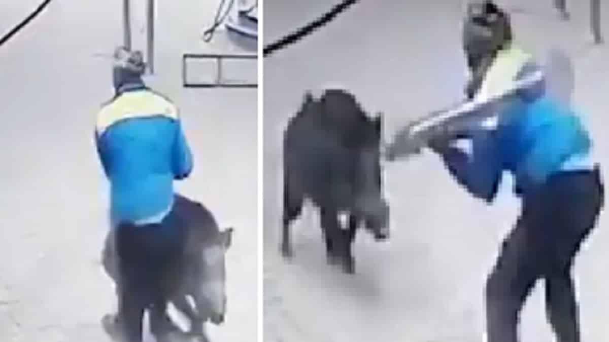 Un jabalí ataca a los empleados de una gasolinera y a una niña que deambulaba por el lugar