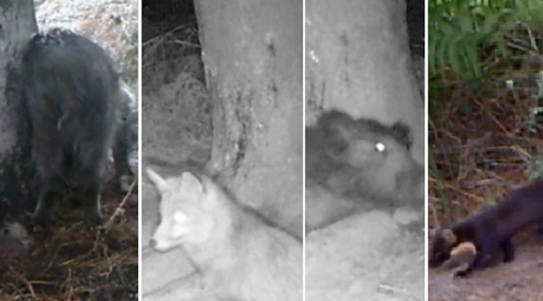 Un cazador gallego pone una cámara trampa durante un año y este es el sorprendente resultado