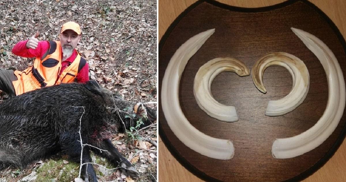 Consigue grabar el momento exacto en el que una pollada de perdiz rompe el cascarón