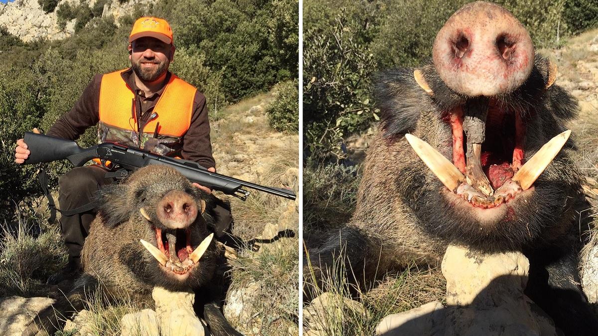 Un jabalí medalla de oro se escapa de una montería de Francia y lo cazan el mismo día en España