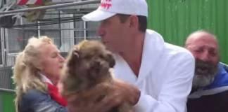 animalistas perro