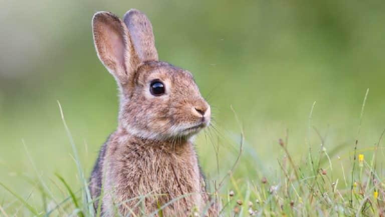 conejos madrid