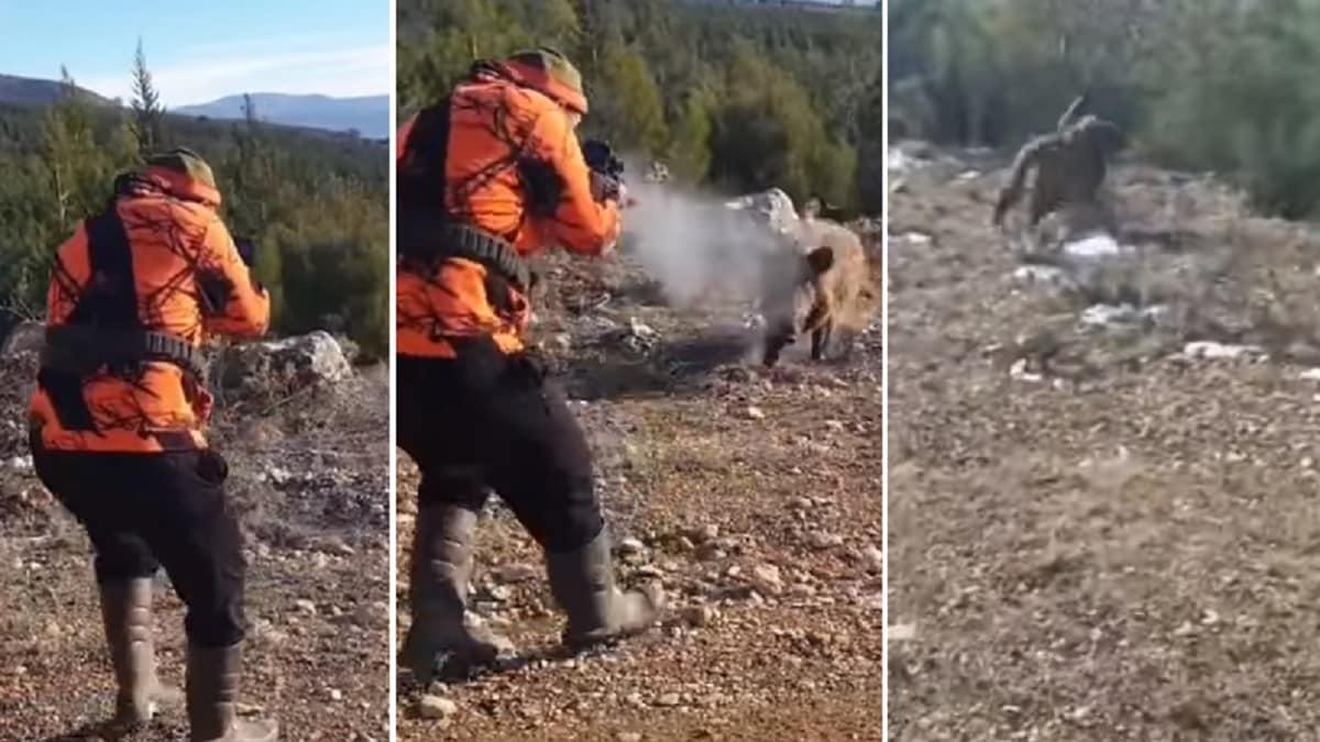 Así es la dureza de los jabalíes: ataca al cazador, encaja tres disparos a bocajarro y se va