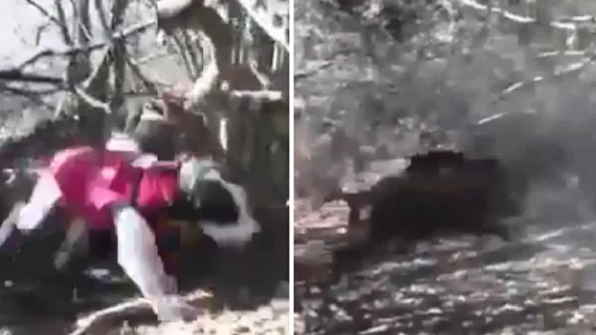 Un cazador salva a un perro del jabalí que lo atacaba en un lance de alto voltaje