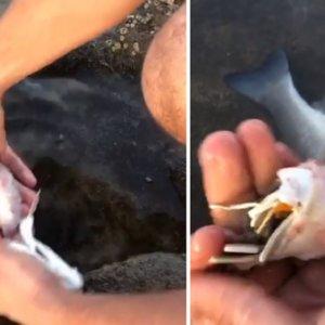 Abren el estómago de un pez y lo que encuentran en su interior indigna a los pescadores