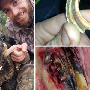 Caza un jabalí al que le faltaba un trozo de amoladera que un amigo encontró clavado en otro