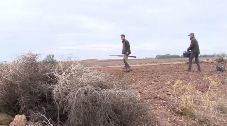 Conejos con hurón: Así ayudan los cazadores a la agricultura en Madrid