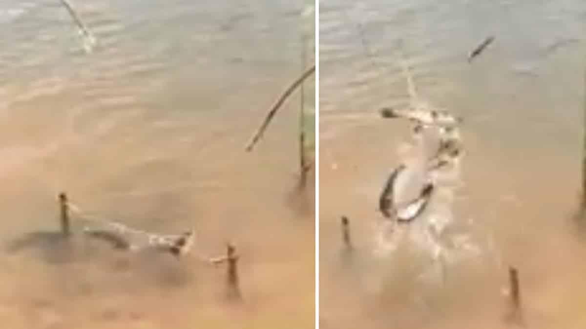 Este ingenioso truco de pesca ha revolucionado las redes sociales