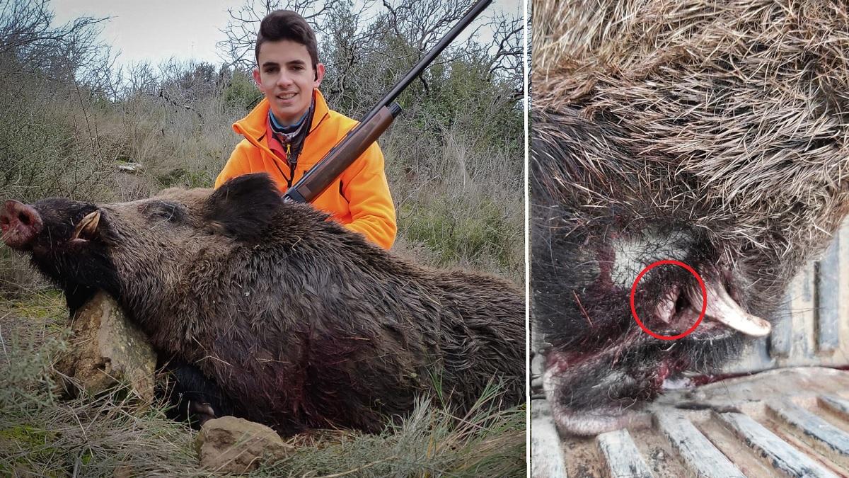 Un joven de 18 años corre tras un jabalí de 140 kilos y sufre este percance al rematarlo