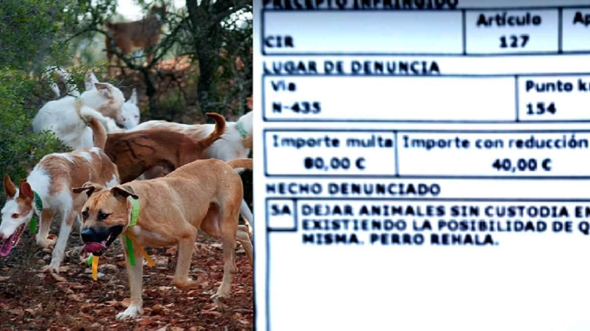 Denunciado otro rehalero cuyo perro se perdió mientras cazaba