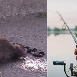 Un pescador 'se pelea' con el jabalí que lo atacó y termina ahogándolo