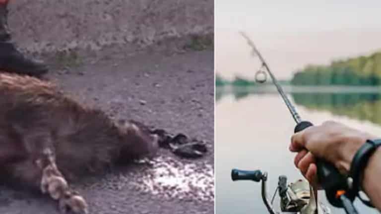 jabalí pescador