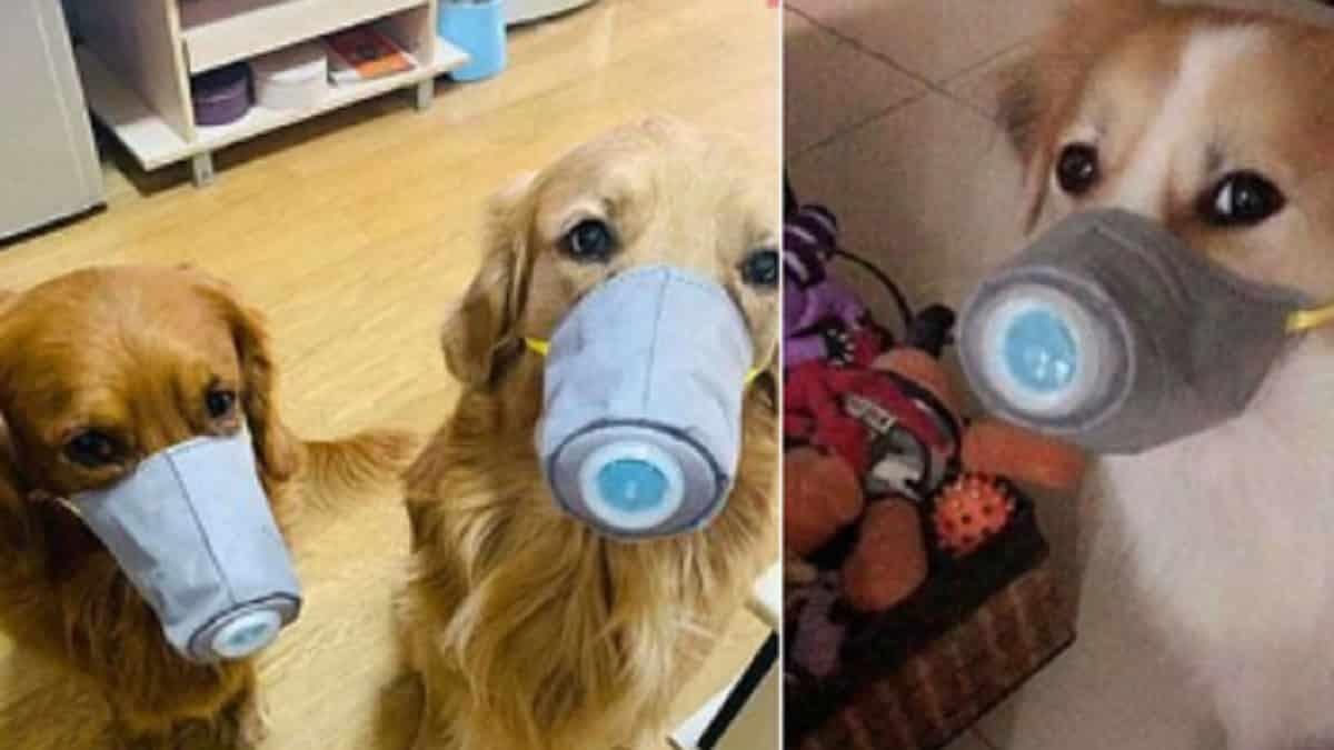 ¿Pueden los perros contagiarse de Coronavirus?
