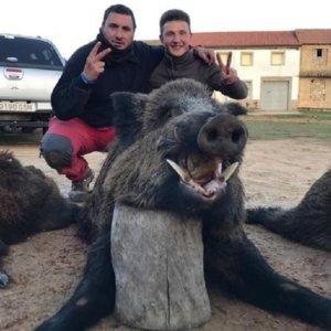 Cobra un gran jabalí en León después de tres certeros disparos