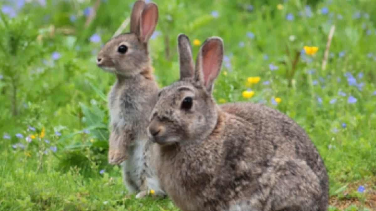 conejos aragón cazadores