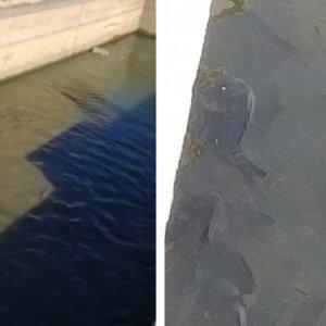 Un pescador denuncia en este vídeo la muerte de cientos de peces en un canal de Badajoz