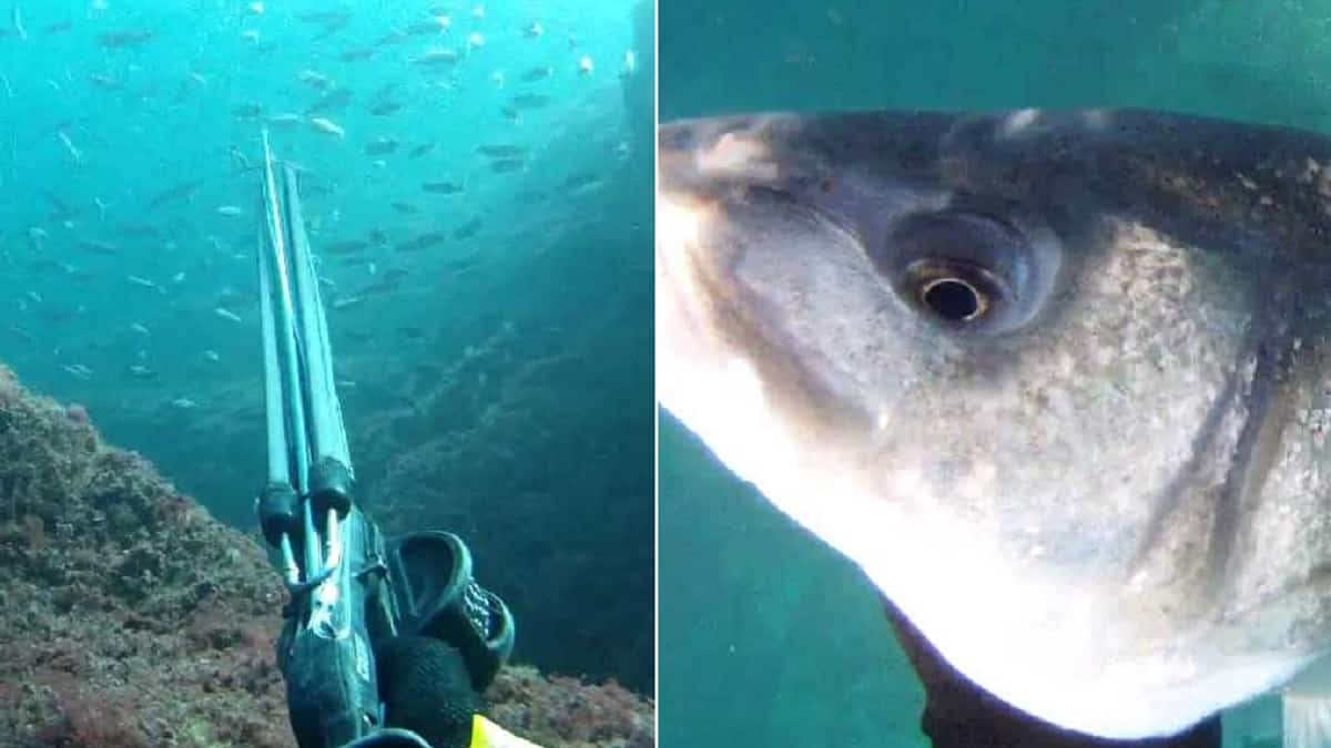 La Justicia avala limitar a los submarinistas la pesca de la lubina