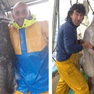 Pescan en Vizcaya un rape del tamaño de un jabalí: 40 kilos