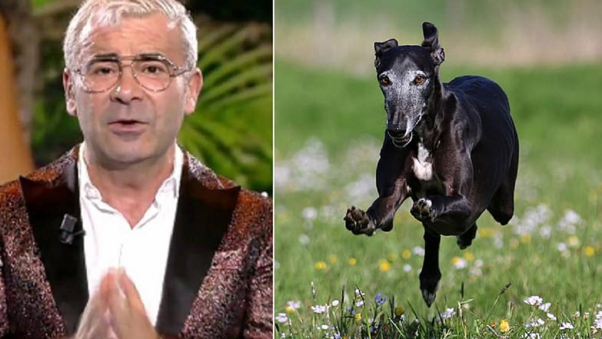 La RFEC exige disculpas a Mediaset por criminalizar a los cazadores  en 'Supervivientes'