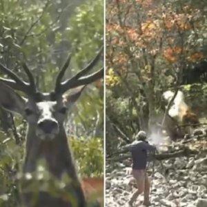Un vídeo cargado de lances monteros que no podrás dejar de ver durante la cuarentena