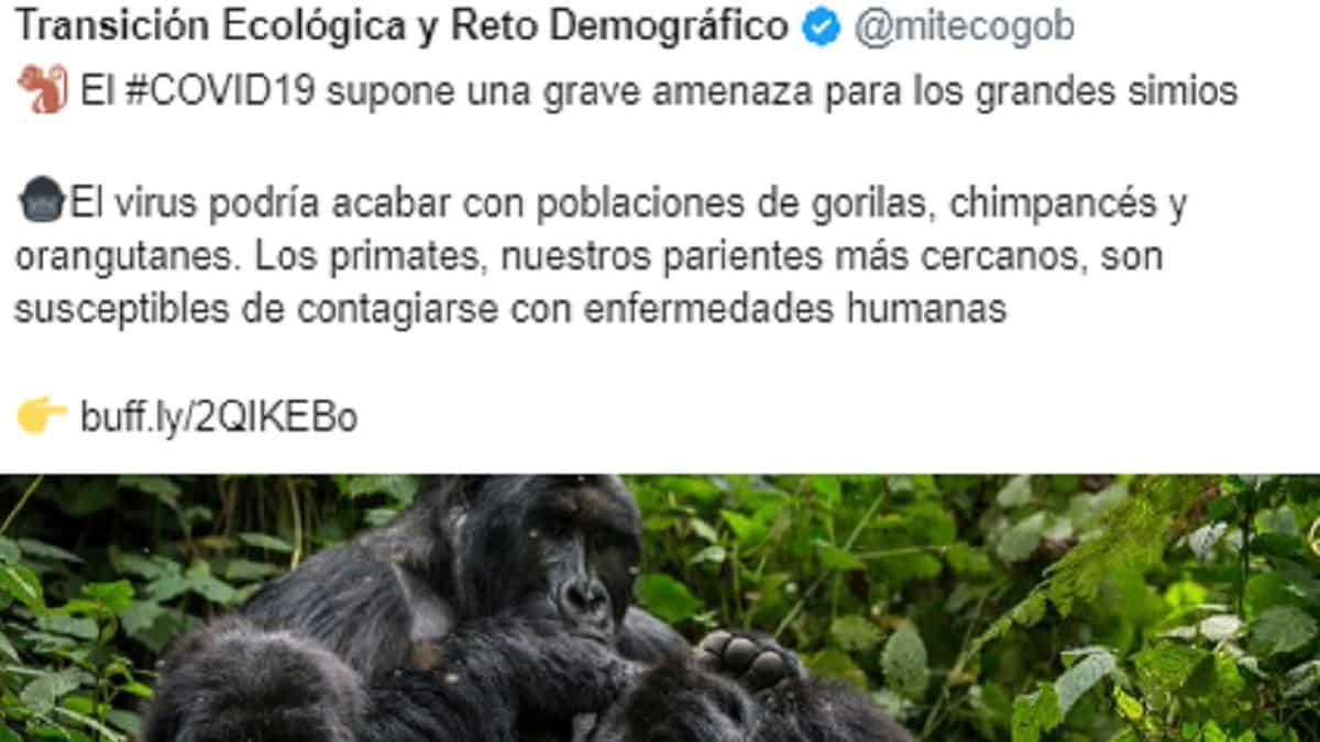 El coronavirus mata 738 personas en un día y el MITECO lamenta que podamos transmitirlo a los simios