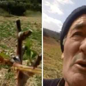 Un agricultor denuncia que una plaga de corzos destroza su plantación durante el estado de alarma
