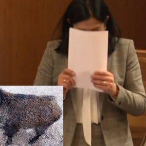 Una diputada sufre un ataque de risa al hablar del 'cerdolí'