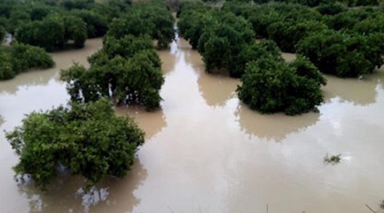 El Gobierno rebaja el IRPF para agricultores y ganaderos afectados por daños climáticos en 2019