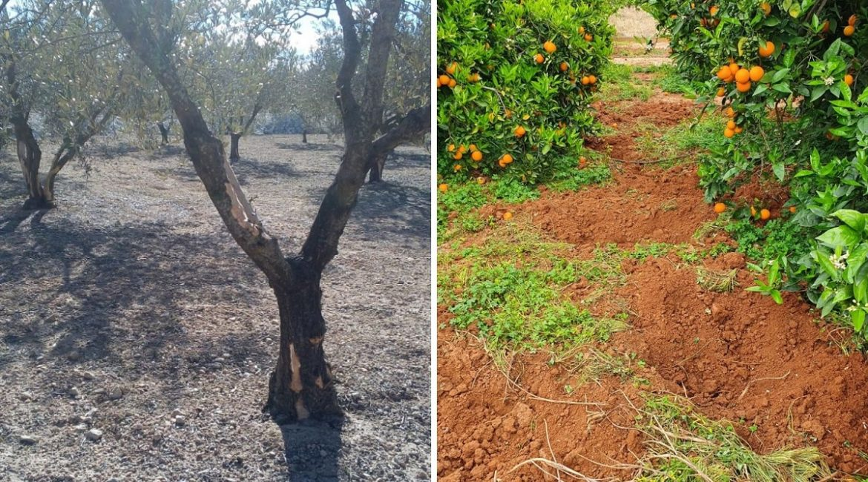 La Comunidad Valenciana también autoriza la caza como medida de control durante el estado de alarma