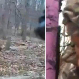 Dos cazadores disparan a la misma pieza a 3 metros ¡y fallan todas!