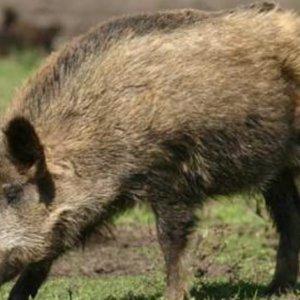 ¿Cómo solicitar la caza por daños a la agricultura en Andalucía durante el estado de alarma?