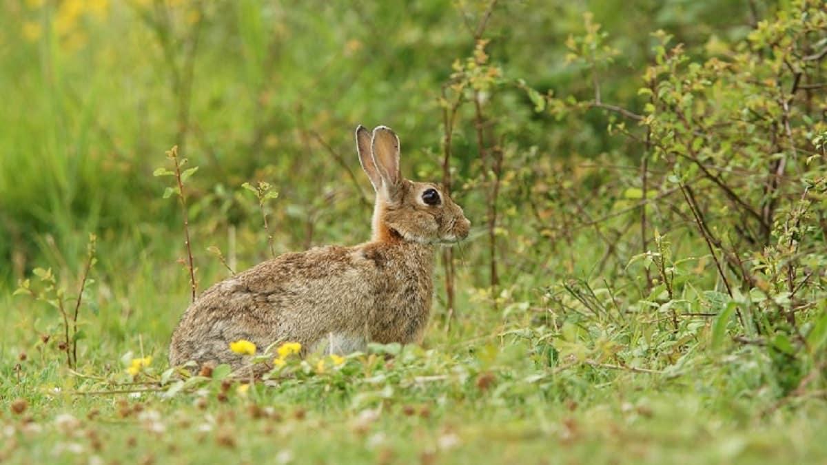 El Gobierno aragonés también permitirá la caza en el estado de alarma por daños agrícolas