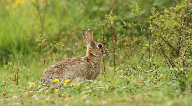 Madrid también autorizará la caza para controlar los daños de la fauna a la agricultura