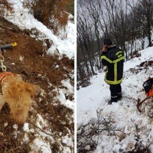 Salvan a un perro al que los tejones dejaron enterrado en su madriguera